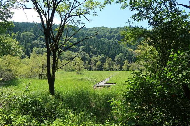 2177 木陰から湿原内の木橋歩道が垣間見られる