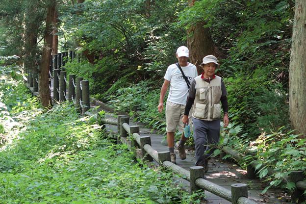 2180 林間歩道を姫川源流へ向かう