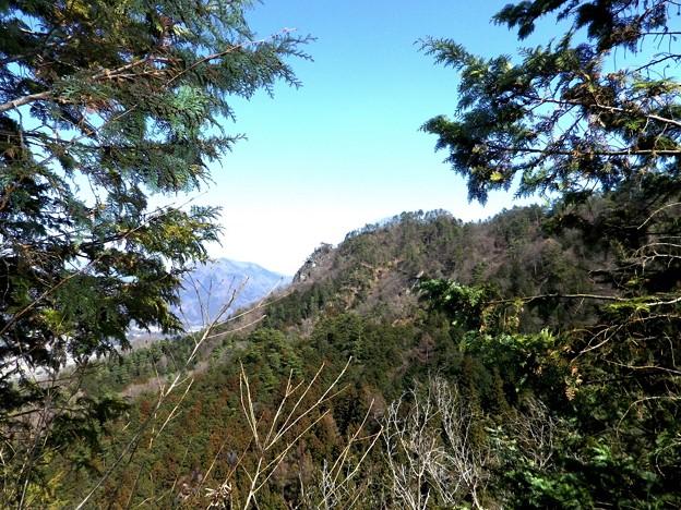 18 枝尾根の樹間から御前山