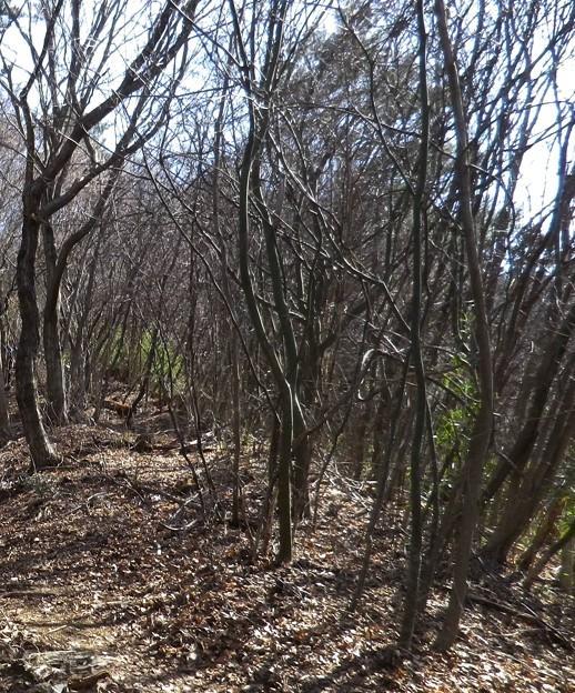 19 菊花山への尾根を辿る