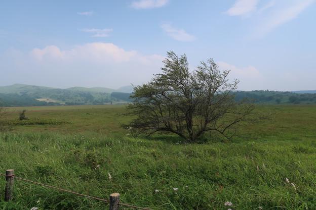 080 湿原の拠水樹