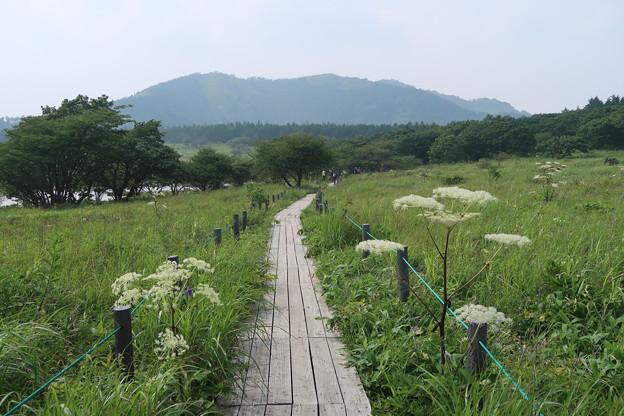 089 周回遊歩道(後:鷲ヶ峰)