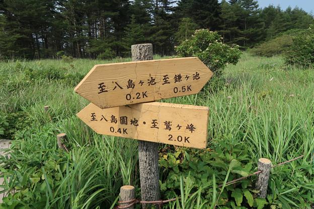 099 八島ケ池方向に進む