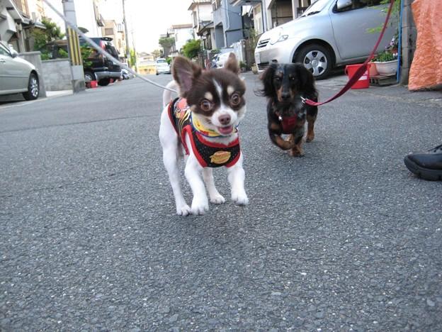 写真: senna0246