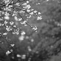 Photos: IMG_4699