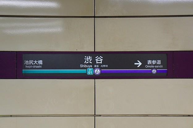 DT01 Z01 渋谷