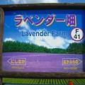 F41 ラベンダー畑