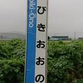 Photos: くびきおおの