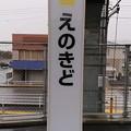Photos: えのきど