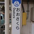 KS36 おおさくら