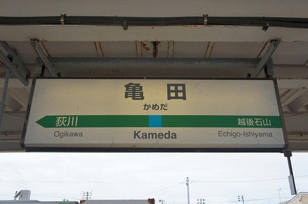 Photos: 亀田