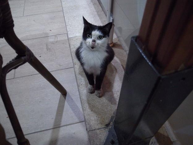 5/1マルディンのレストランでおねだりする猫