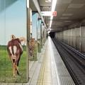 Photos: 002781_20181020_大阪市高速電気軌道_動物園前