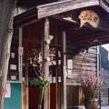 Photos: 002992_20190302_JR岩山
