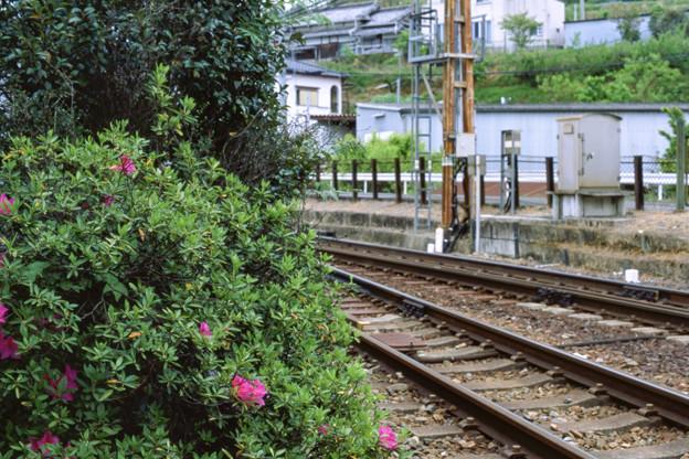 Photos: 003199_20190429_南海電気鉄道_学文路