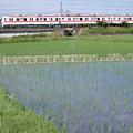 Photos: 004331_20200621_神戸電鉄_神鉄道場-横山