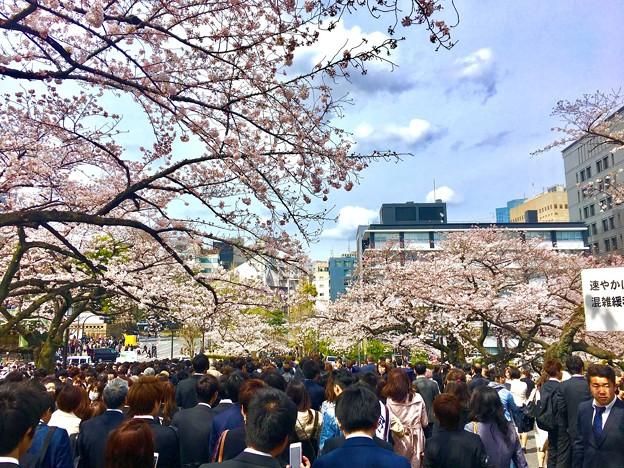 写真: はじまりの桜並木