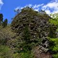 Photos: 新緑と古岩屋