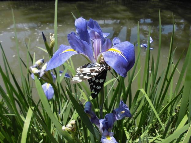 CIMG8102花と蝶