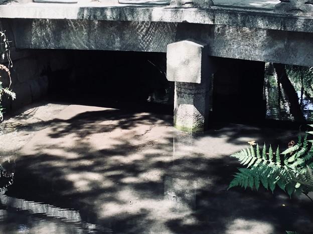 Photos: 水辺1
