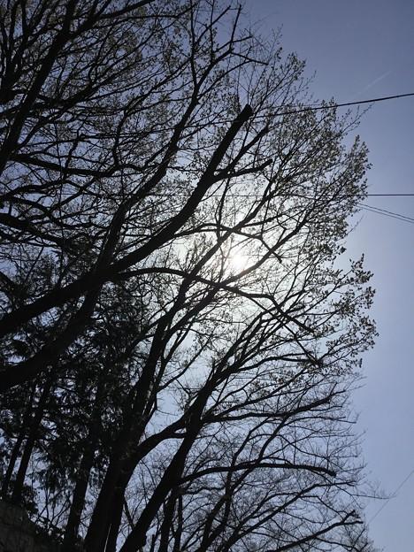 Photos: 筋道