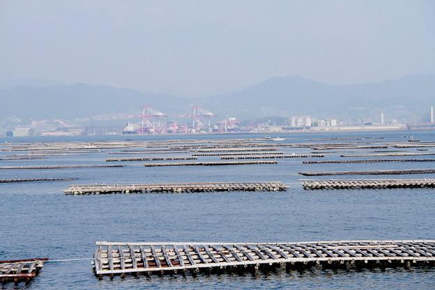 Photos: 瀬戸の牡蠣