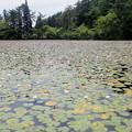 Photos: 覆われる水面