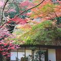 Photos: 藁ぶき
