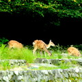 Photos: 野生動物