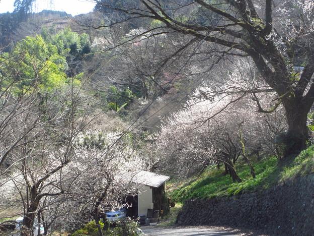 Photos: 里山の景色