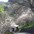 写真: 里山の景色