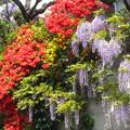 写真: 花がいっぱい