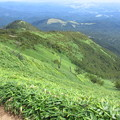 写真: 高原の笹原
