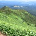 高原の笹原
