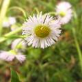 Photos: 春紫苑