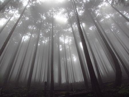 Photos: 霧の道