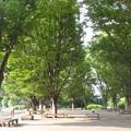 欅&キャンパス
