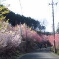 Photos: 花桃が咲く景色