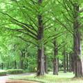 まっすぐな木