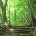 Photos: 新緑の山道