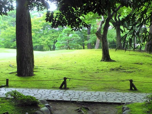 Photos: 夏の庭園