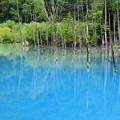 写真: 青い池♪
