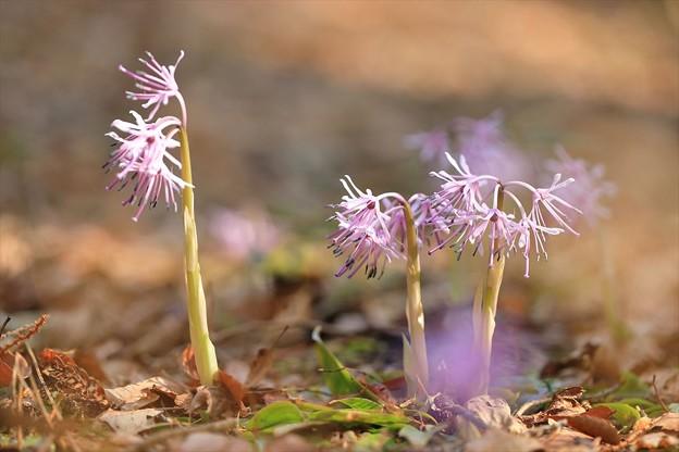 写真: 可愛い花・