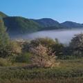 写真: 朝の小田代ヶ原