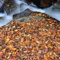 写真: 渓谷の秋