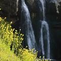 Photos: 春の滝♪
