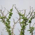 Photos: 北海道の野鳥達♪