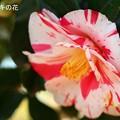 写真: 春の朝