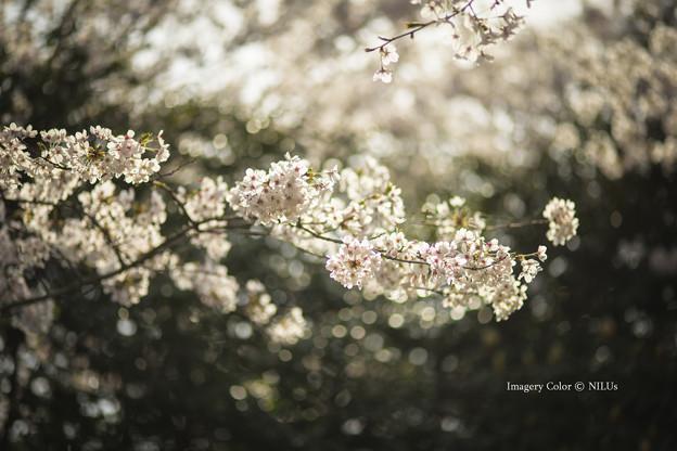 写真: Imagery Color