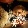写真: 魔法使いの夜